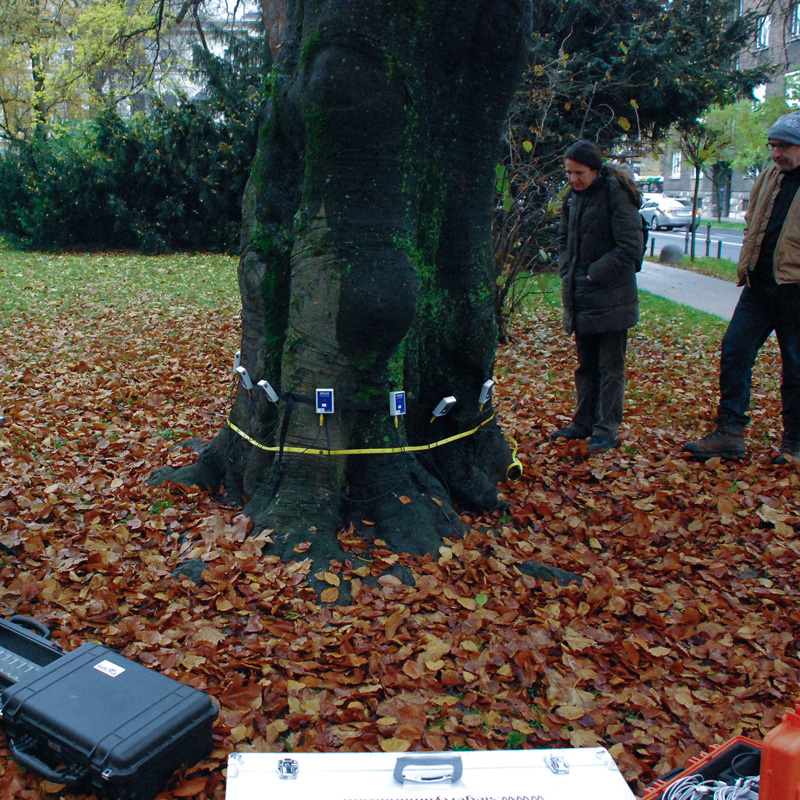 Obrezovanje dreves na višini in posek