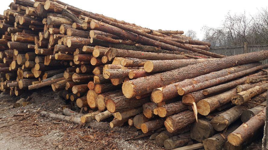 Odkup in prodaja lesa