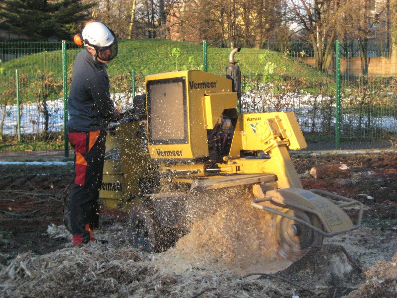 Odstranjevanje drevesnih štorov