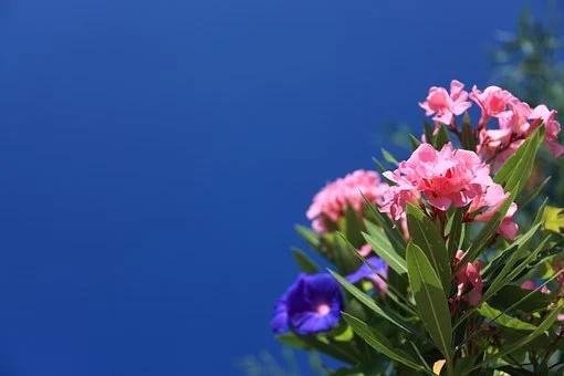 V urejanje okolice vključite cvetje