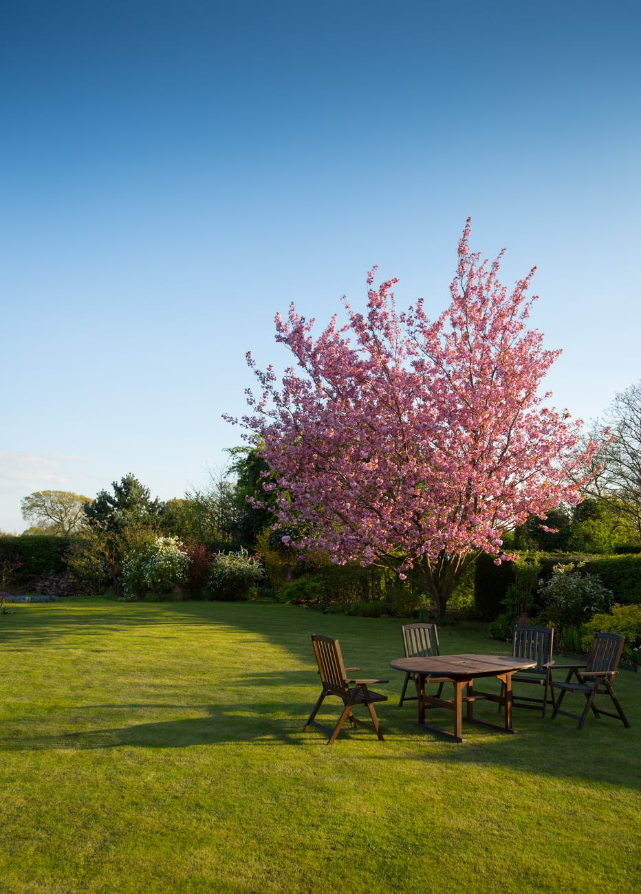 Urejanje vrta in okolice hiše - zasaditve in obrezovanje