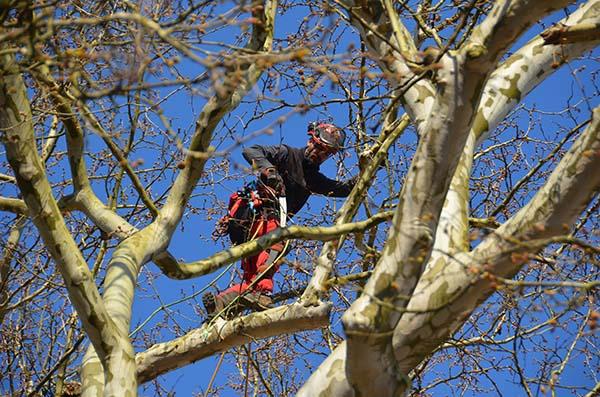 tehnika podiranja drevja