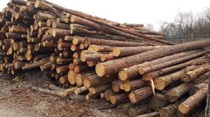 Prevoz odpadnega lesa
