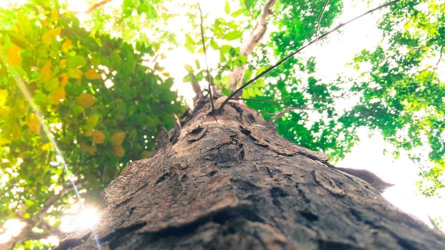 Sadike dreves za parke